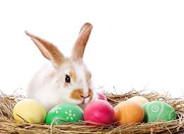 1280x800px 982469 easter bunny 147 57 kb 06 09 2015 by a arina