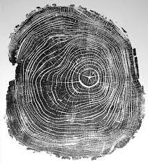 wood print black locust ii tree print prints posters lintonart