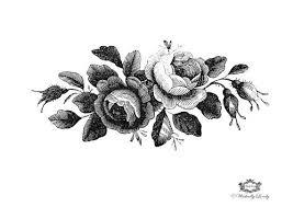 best 25 rose illustration ideas on pinterest forrest