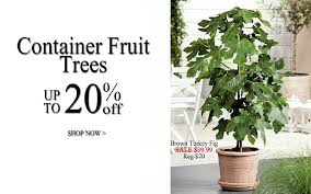 plantogram fruit trees fruit tree fruit trees for sale