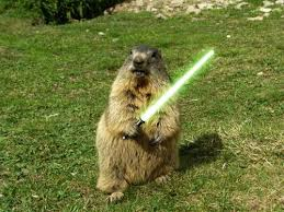 Groundhog Meme - groundhog day meme chuckers it s groundhog day 15 photos