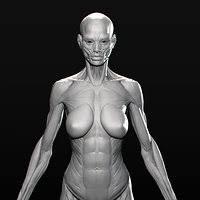 Female Anatomy Figure Artstation Anatomy Figure Marc Brunet