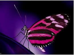 pink butterfly wallpapers 56