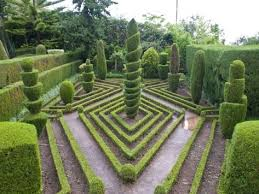 English Box Topiary - 30 best box hedging ideas images on pinterest topiaries topiary
