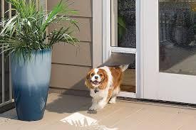Sliding Glass Door With Dog Door by Petsafe Sliding Glass Pet Door Large Chewy Com