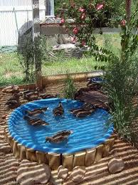 How To Make Backyard Pond by Best 20 Duck Pond Ideas On Pinterest Duck Coop Pet Ducks And