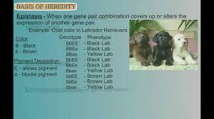 genetics part 2 variations on mendel u0027s themes youtube