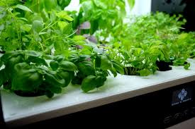 Hydroponics Vegetable Gardening by Homefarm Home Hydroponic Garden Gadget Flow