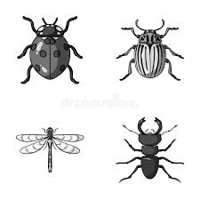 was ist das für ein insekt eine wanze oder was urlaub insekten insekt wanze käfer tatze insekten stellten sammlungsikonen im