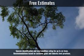 services northeast tree inc