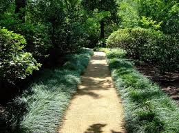 backyard garden with monkey grass plants as border monkey grass