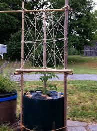 bamboo tomato trellis garden pinterest trellis tomatoes and