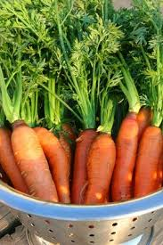 41 best growing carrots images on pinterest growing vegetables