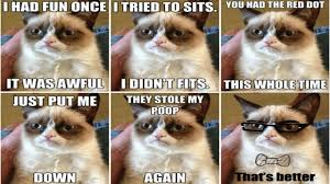 Internet Meme Cat - 22 best internet memes ever