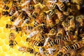 benicia community bees benicia community gardens
