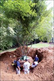 tree removal pruning emergency services available