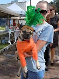 another local cutie at the 2011 doggie door dog costume contest on