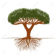 vector illustrationbonsai tree with roots royalty free cliparts