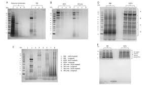 properties of the cuticular proteins of anopheles gambiae as