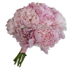 peonies wedding flowers buy wholesale peonies in bulk pink
