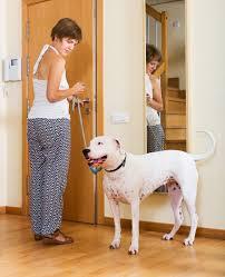boxer dog 2015 diary boxer dog breed information dog training nation