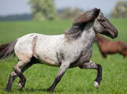Are Horses Color Blind Real Horse Colors And Equine Color Genetics