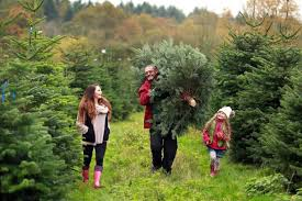 getting a real christmas tree this year this is how to make it