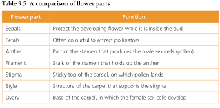 Part Of Flowers - 9 4 reproduction in plants biology 2016