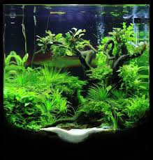 Small Tank Aquascaping 169 Best Aquascaping Nano Aquariums Images On Pinterest