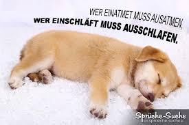 lustige hundesprüche lustiger spruch zum wochenende mit hund ausschlafen sprüche suche