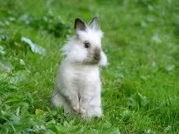 baby bunny background for desktop wallpaper wiki