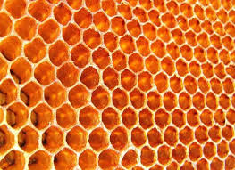 honeycomb edible if honey is bee vomit what is honeycomb organic authority