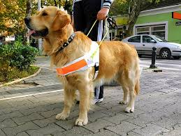 Comfort Dog Certificate How Do Therapy Dogs Get Certified Petfinder