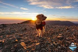 skiing with australian shepherd how to start hiking and backpacking with your dog trail to peak