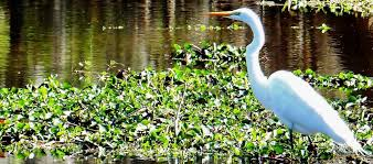 Louisiana Wildlife Tours images Swamp tour new orleans new orleans swamp tours llc jpg
