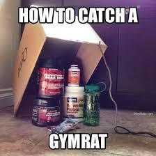 Gym Rats Meme - funny gym rat meme muscular ca