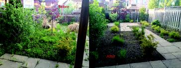 100 backyard cleanup services dog waste clean up service