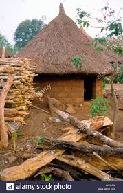 Mexican Thatch Roofing by Traditional Round House With Thatched Roof In A Village Near Man