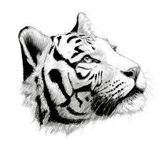 pictures of tiger tattoos design tiger big