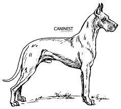 german shepherd coloring pages free perfect dog breed coloring pages 28 for free coloring kids with