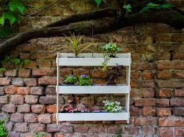 cura giardino la app hangreen cura il giardino verticale cerca partner