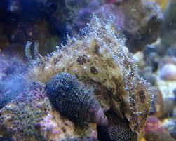 algar owner aquarium owner archives marine aquarium service