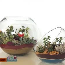 succulent terrarium 10 u201d san diego only urban succulents