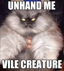 Evil Cat Meme - seriously if i wasn t allergic and never want another pet i