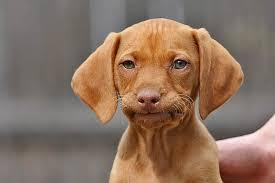 Frowning Dog Meme - meme creator unamused puppy meme generator at memecreator org