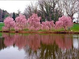 philadelphia is america u0027s garden capital