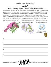 quaking aspen u2013 adaptations of trees