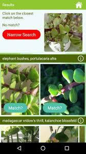 Plant Diseases Identification - greenapps u0026web garden answers app for identifying plants through