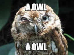 Funny Owl Meme - meme maker a owl a owl