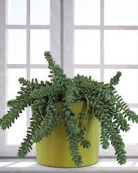 Indoor Container Gardening - 14 best indoor succulents to grow at home balcony garden web